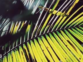 Costa Rica Leaves